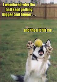 Hyper Dog Meme - 17135 25 funny dog memes pictures to pin on pinterest