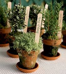 Flower Pot Wedding Favors - herbs are for your green wedding