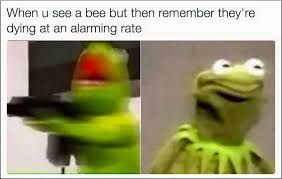 Frog Memes - when u see a bee but remember they re dying at an alarming rate