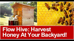 flow hive harvest honey at your backyard visit www honeyflow