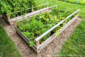 how to grow a vegetable garden gardening tips for brown thumbs