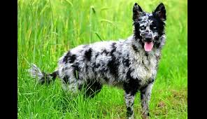 Cool Looking - 13 coolest looking breeds
