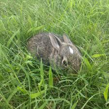 backyard bunny baby album on imgur