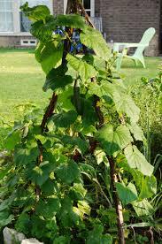 repurpose branches in your garden garden in delight