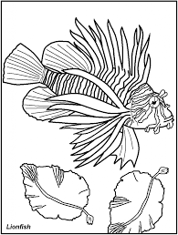 the incredible fish coloring pages for adults pertaining to home