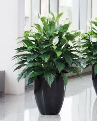 silk plants lifelike spathiphyllum silk floor plant at