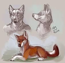 ethiopian wolf sketches by thayrustback on deviantart