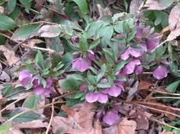 plants for winter blooms from lynn u0027s garden