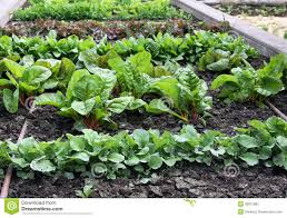 Garden Raised - bed garden raised vegetable with watering system stock image
