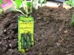 webisode grow your own salsa garden youtube