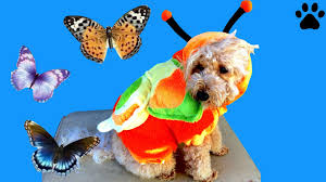 dog clothes for halloween how to make halloween dog costume butterfly puppy diy
