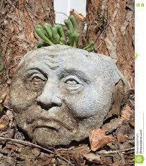 man planter with succulent hair stock photo image 75551359