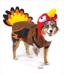 tips for keeping pets safe on thanksgiving day montgomery animal