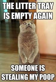 Make Your Own Grumpy Cat Meme - cool cat meme favorites and generators cool photo editors