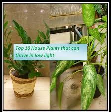 Plants That Survive With No Light 28 Plants That Survive With No Light Office Plants No