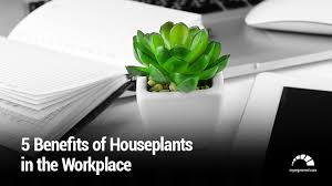 benefits of houseplants 5 benefits of houseplants in the workplace rms