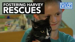 lexus amanda relationships fostering harvey rescues 100 1504812969 jpg