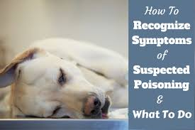 symptoms of dog poisoning and what to do if you suspect it