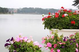 cool places to see flowers da lat flower festival