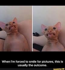 Hairless Cat Meme - funny hairless cat memes funny pics story
