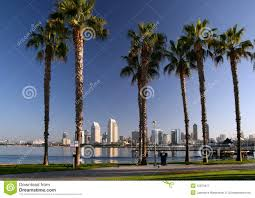 Tree San Diego San Diego And Coronado Palm Trees Editorial Photography Image Of