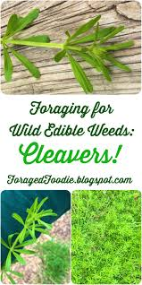 field guide to the native plants of sydney the foraged foodie foraging how to find identify prepare and