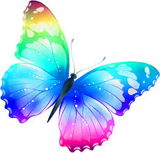 the colorful butterfly poem by small writer 12