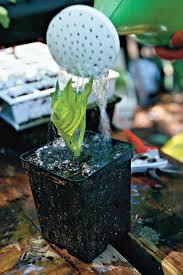 slide show dreamy hydrangeas southern living