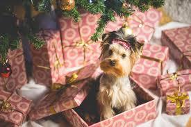 7 fun ideas for your family christmas cards christmas