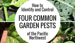 how to identify and control four common garden pests of the