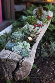 beautiful succulent planter ideas 114 succulent pot ideas