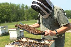 winter bees u0026 formic acid used right a successful combination