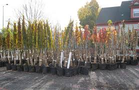 end of season tree sale offers low prices growth rings