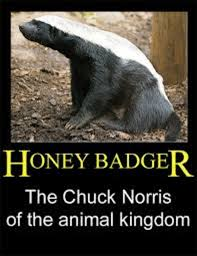 Honey Badger Memes - honey badger image gallery know your meme