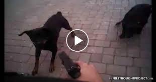 watch cops ignore u0027beware of dog u0027 signs walk into yard kill
