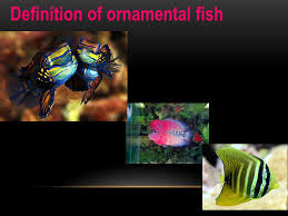 viral disease in aquarium fish ppt
