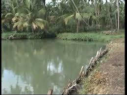 kerala research fish farm vinsaj ltd