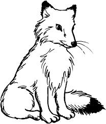 artic fox coloring pages place color