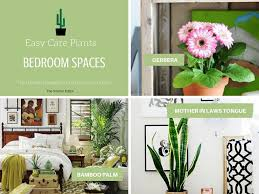 the ultimate guide to houseplants for your home part 2 the