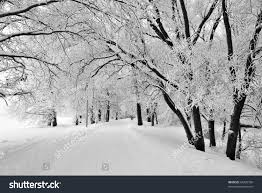 beautiful trees covered winter park stock photo 64320730