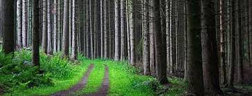 conscious productivity seeing the forest not just the trees