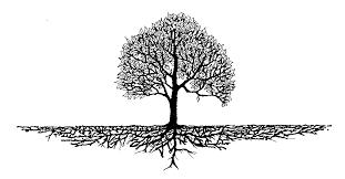 tree roots gunn