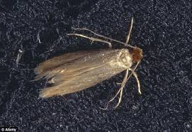 What Are These Tiny Bugs In My Bathroom Moth Experts Advise Ross Clark On Stopping The Insects From