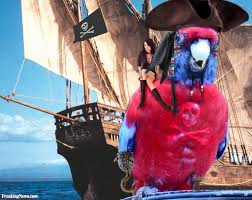 pirate parrot with a woman on his shoulder pictures