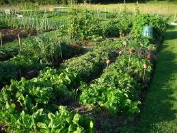 Vegetable Garden Plot Layout by Starting New Gardens Halifax Garden Network