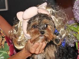pet halloween costumes business insider