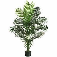 house plants tree interior design