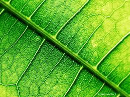 leaf wallpaper 34 free modern leaf wallpapers nm cp