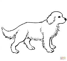 golden retriever puppy coloring pages coloring pages kids collection