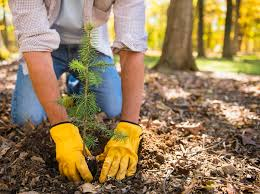 how to when to plant new trees